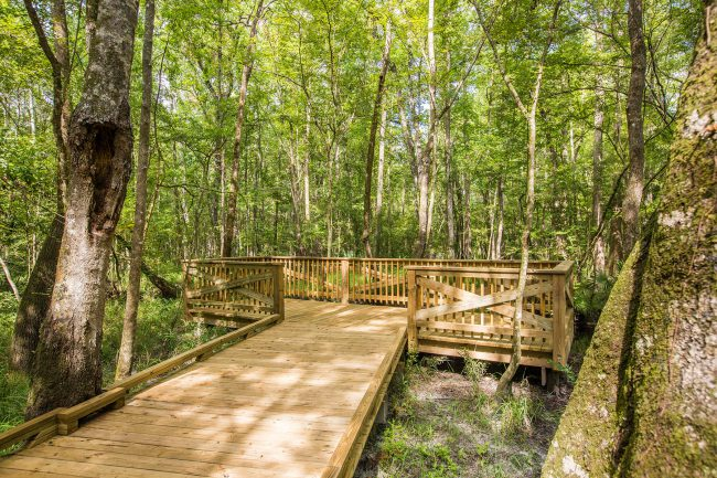 Trail Viewing Deck