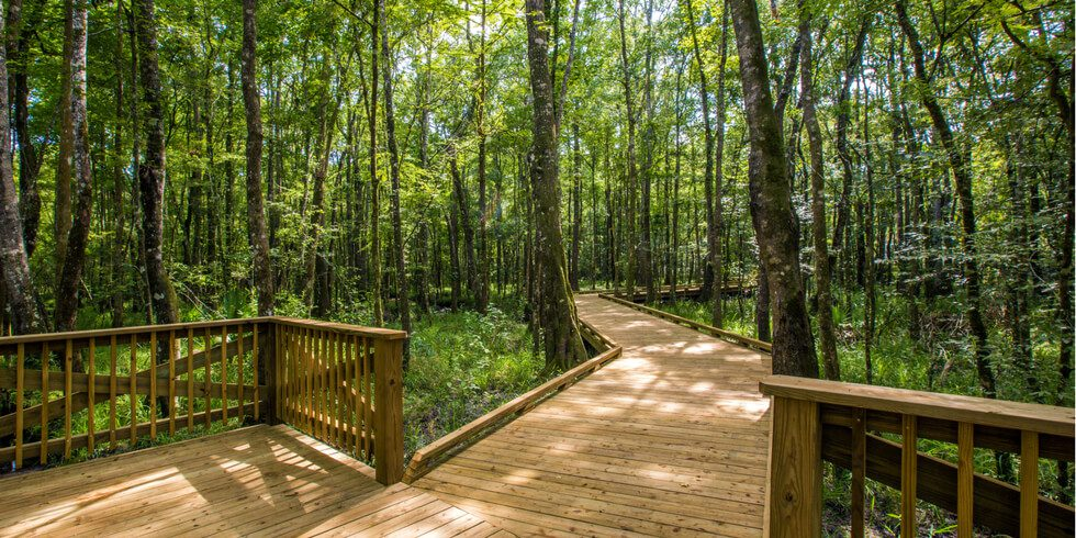 Living with Nature at Shearwater