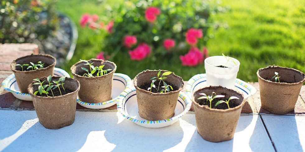 Find Your Green Thumb at Shearwater