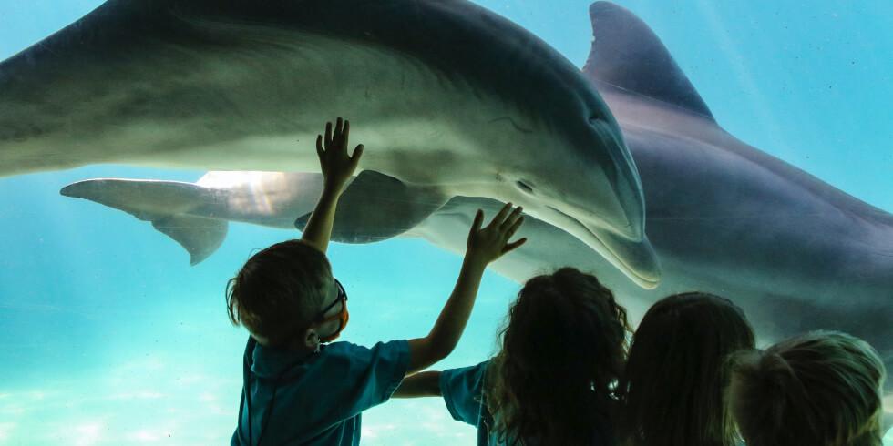 5 Fantastic Kids' Activities in St. Augustine
